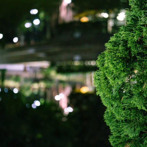 5 Sustainable Ideas for Your Event
